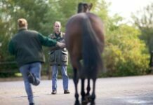 What Is Included in Horse Medical